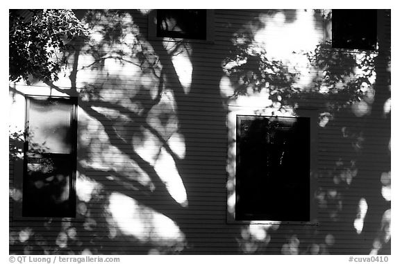 Tree shadows on wall. Cuyahoga Valley National Park (black and white)