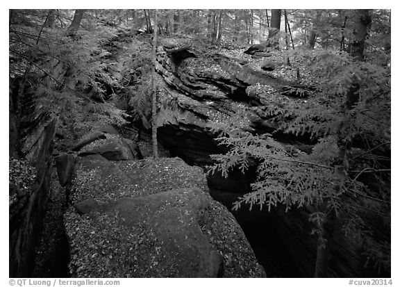 Trees and sandstone blocs,  The Ledges. Cuyahoga Valley National Park (black and white)