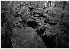 Trees and sandstone blocs,  The Ledges. Cuyahoga Valley National Park, Ohio, USA. (black and white)