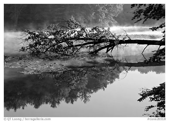 Fallen tree and reflectiont, Kendal lake. Cuyahoga Valley National Park (black and white)