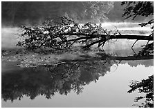 Fallen tree and reflectiont, Kendal lake. Cuyahoga Valley National Park ( black and white)