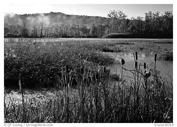 The beaver marsh, early morning. Cuyahoga Valley National Park (black and white)
