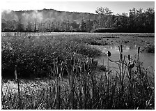 Reeds and beaver marsh, early morning. Cuyahoga Valley National Park, Ohio, USA. (black and white)
