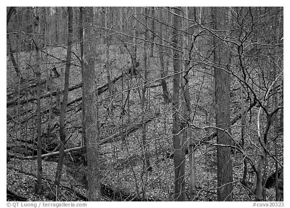 Barren trees and fallen leaves on hillside. Cuyahoga Valley National Park (black and white)