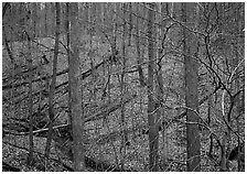Barren trees and fallen leaves on hillside. Cuyahoga Valley National Park, Ohio, USA. (black and white)