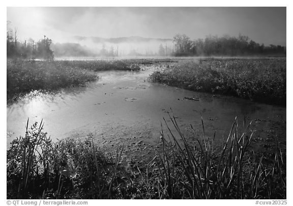 Aquatic plants, Beaver Marsh, and mist, early morning. Cuyahoga Valley National Park (black and white)