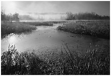 Aquatic plants, Beaver Marsh, and mist, early morning. Cuyahoga Valley National Park, Ohio, USA. (black and white)
