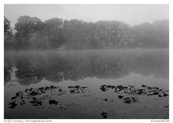Mist on Kendall lake. Cuyahoga Valley National Park (black and white)