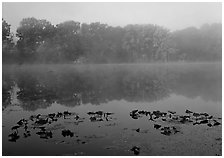 Mist on Kendall lake. Cuyahoga Valley National Park ( black and white)