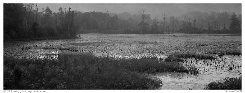 Marsh landscape at dawn. Cuyahoga Valley National Park (black and white)