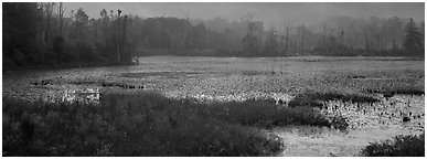 Marsh landscape at dawn. Cuyahoga Valley National Park (Panoramic black and white)