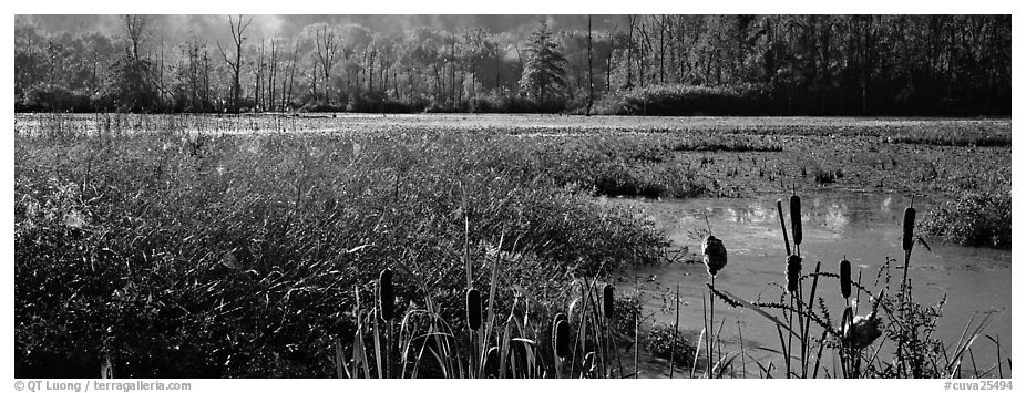 Wetlands scenery. Cuyahoga Valley National Park (black and white)