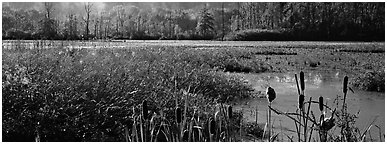Wetlands scenery. Cuyahoga Valley National Park (Panoramic black and white)