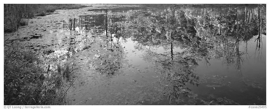 Trees reflected in pond in the fall. Cuyahoga Valley National Park (black and white)