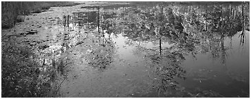 Trees reflected in pond in the fall. Cuyahoga Valley National Park (Panoramic black and white)