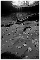 Fallen leaves on gren slabs and Blue Hen Falls. Cuyahoga Valley National Park, Ohio, USA. (black and white)