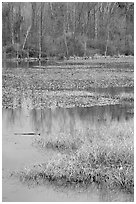 Beaver Marsh and reflections. Cuyahoga Valley National Park, Ohio, USA. (black and white)