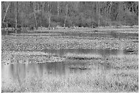 Beaver Marsh in spring. Cuyahoga Valley National Park, Ohio, USA. (black and white)