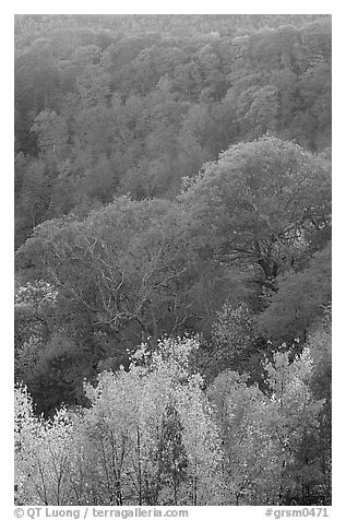 Trees in fall colors over succession of ridges, North Carolina. Great Smoky Mountains National Park (black and white)