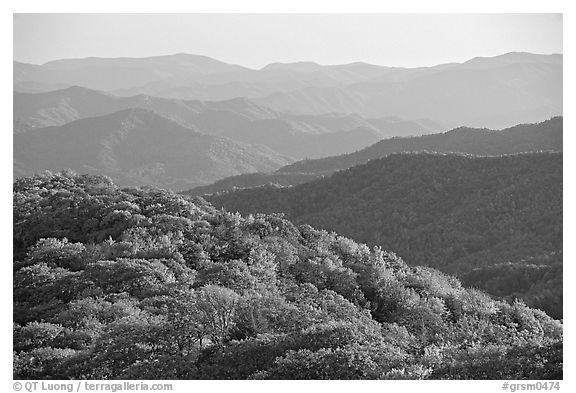 Trees with autumn colors and blue ridges from Clingmans Dome, North Carolina. Great Smoky Mountains National Park (black and white)