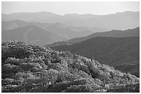 Trees with autumn colors and blue ridges from Clingmans Dome, North Carolina. Great Smoky Mountains National Park, USA. (black and white)