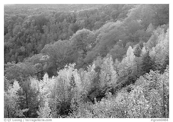Ridges with trees in fall colors, North Carolina. Great Smoky Mountains National Park (black and white)