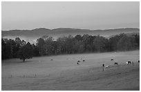 Pasture at dawn with rosy sky, Cades Cove, Tennessee. Great Smoky Mountains National Park, USA. (black and white)