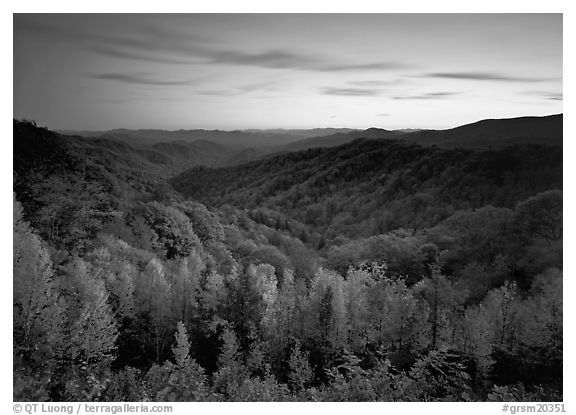 Row of trees, valley and ridges in fall color at sunset, North Carolina. Great Smoky Mountains National Park (black and white)