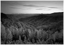 Row of trees, valley and ridges in fall color at sunset, North Carolina. Great Smoky Mountains National Park, USA. (black and white)