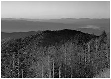 Trees in fall foliage and ridges from Clingman's dome at sunrise, North Carolina. Great Smoky Mountains National Park, USA. (black and white)