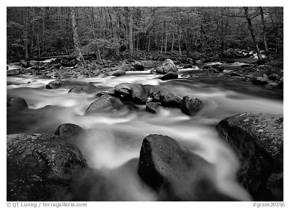 Confluence of the Little Pigeon Rivers, Tennessee. Great Smoky Mountains National Park (black and white)