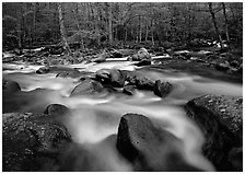 Confluence of the Little Pigeon Rivers, Tennessee. Great Smoky Mountains National Park, USA. (black and white)