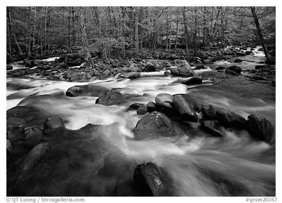 Confluence of the Middle Prong of the Little Pigeon River, Tennessee. Great Smoky Mountains National Park (black and white)