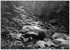 Spring scene of dogwood trees next to river flowing over boulders, Treemont, Tennessee. Great Smoky Mountains National Park, USA. (black and white)