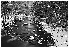 Snowy creek in winter. Great Smoky Mountains National Park, USA. (black and white)