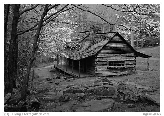 Noah Ogle historical cabin framed by blossoming dogwood tree, Tennessee. Great Smoky Mountains National Park (black and white)