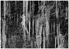 Icicles and rock wall. Great Smoky Mountains National Park, USA. (black and white)
