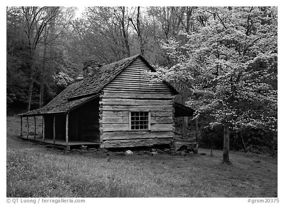 Noah Ogle log cabin in the spring, Tennessee. Great Smoky Mountains National Park (black and white)