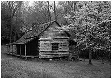 Noah Ogle log cabin in the spring, Tennessee. Great Smoky Mountains National Park ( black and white)