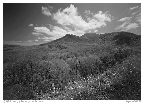 Hillsides covered with trees below Mount Le Conte in the spring, Tennessee. Great Smoky Mountains National Park (black and white)