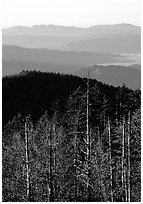 Half-barren trees and ridges from Clingmans Dome at sunrise, North Carolina. Great Smoky Mountains National Park, USA. (black and white)