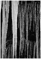 Icicles close-up, Tennessee. Great Smoky Mountains National Park, USA. (black and white)