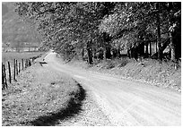 Gravel road in autumn, Cades Cove, Tennessee. Great Smoky Mountains National Park, USA. (black and white)