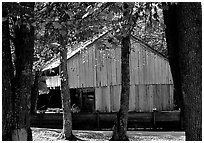 Barn in fall, Cades Cove, Tennessee. Great Smoky Mountains National Park, USA. (black and white)