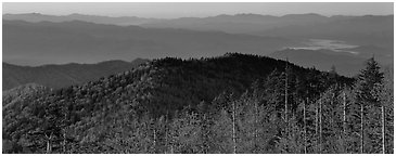 Trees and distant mountaintop ridges at sunrise. Great Smoky Mountains National Park (Panoramic black and white)