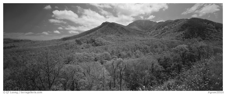 Appalachian hills covered with green trees in the spring. Great Smoky Mountains National Park (black and white)