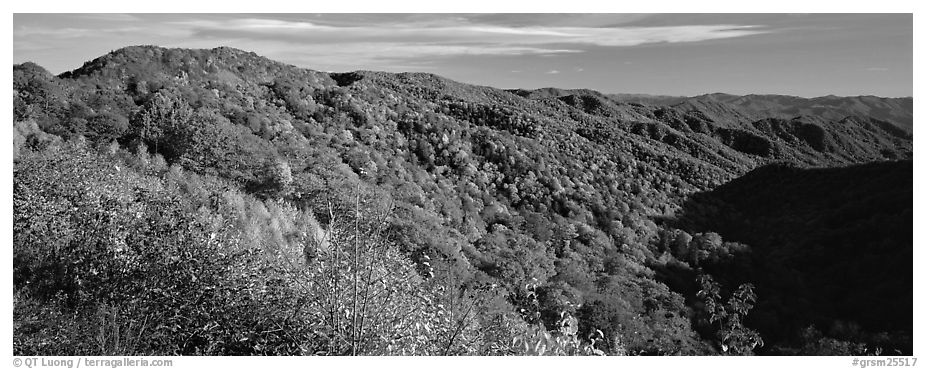 Appalachian hills covered with trees in autumn colors. Great Smoky Mountains National Park (black and white)