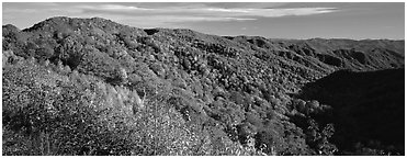 Appalachian hills covered with trees in autumn colors. Great Smoky Mountains National Park (Panoramic black and white)