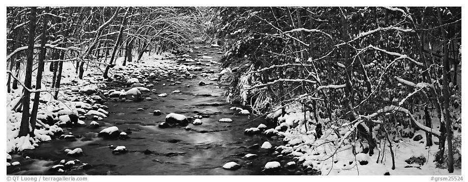 Stream in wintry forest. Great Smoky Mountains National Park (black and white)