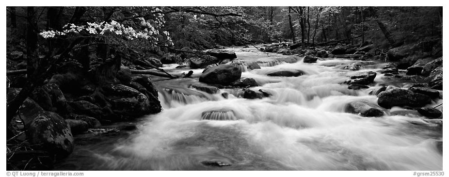 White water of stream in decidous forest. Great Smoky Mountains National Park (black and white)